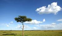 一本樹.jpg
